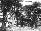 Old Lebanon Photo Tourism Visit Lebanon